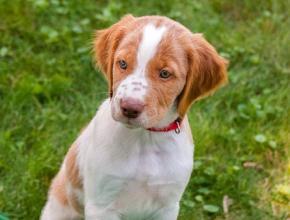 puppy sitter hackettstown, NJ