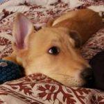 Hackettstown dog sitter