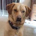Wylie, Hackettstown dog sitting client