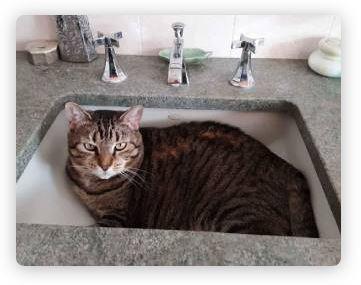 hackettstown cat sitter